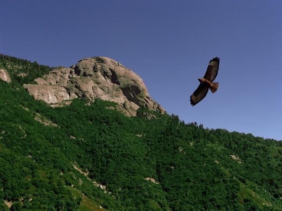 stockvault-flight-of-the-hawk101248
